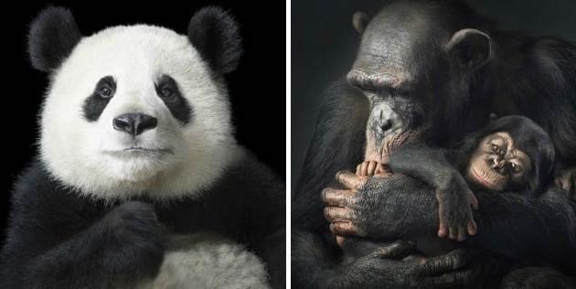 Классные животные.