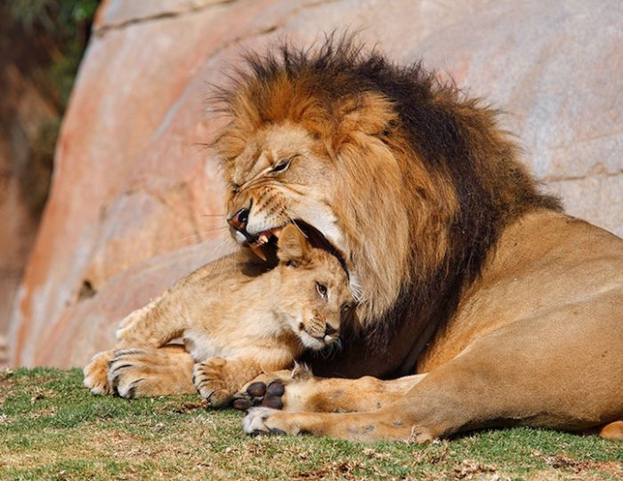 Фотографии животных, сделанные в нужный момент (30 фото)