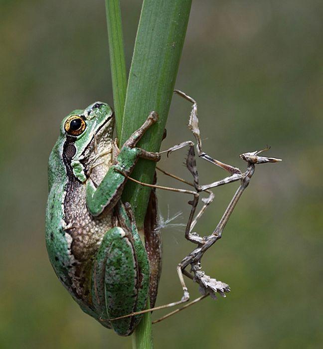 Фотографии животных, сделанные в нужный момент. Часть 2 (50 фото)