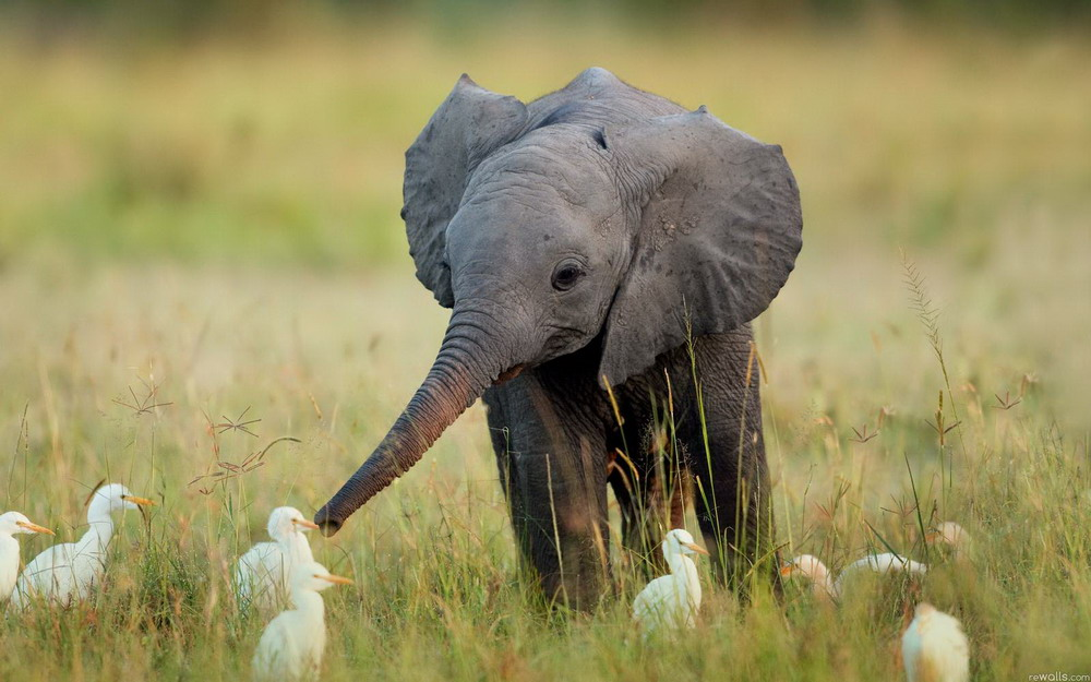 Прикольные, смешные и милые звери.