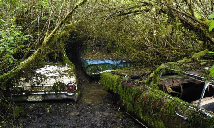 Таинственное кладбище заброшенных автомобилей в лесу (30 фото)