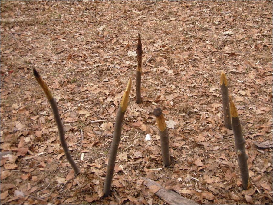 Опасные ловушки в парке