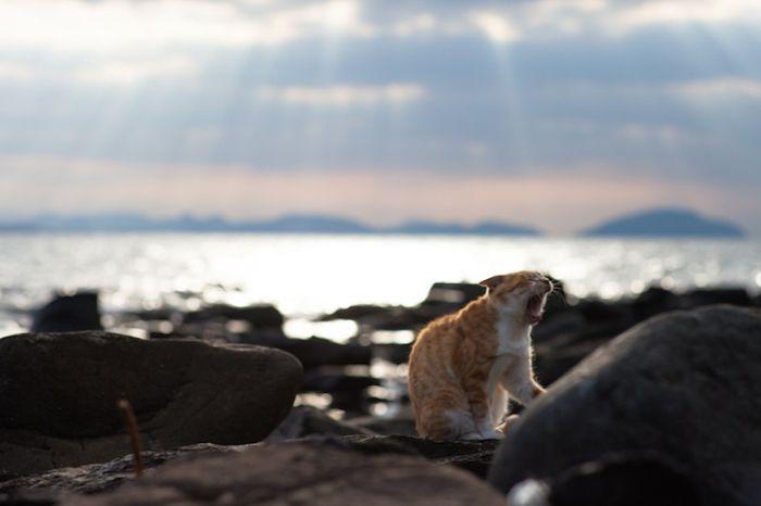 Кошачий рай по-японски (50 фото)