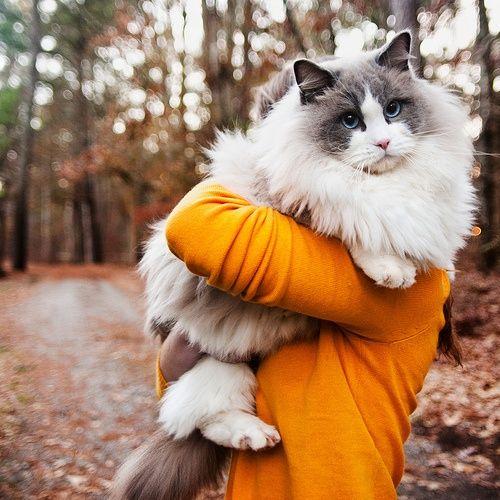 Милые и прикольные животные ( 76 фото )