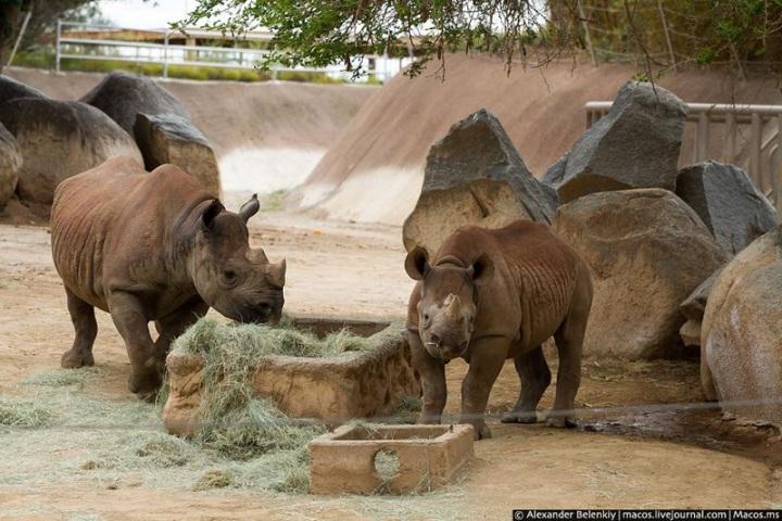 Лучший американский зоопарк.