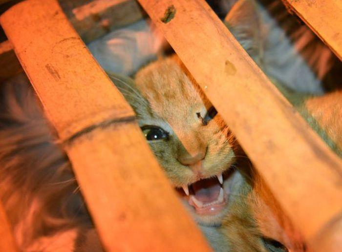 Авария грузовика спасла почти тысячу котов (16 фото)