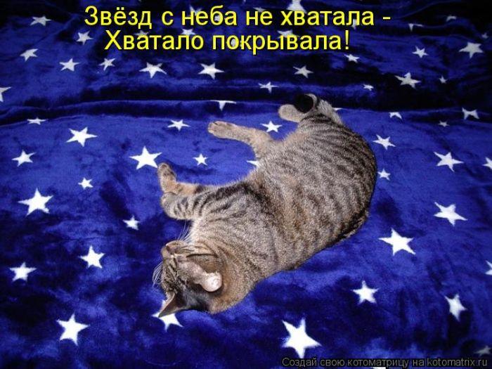 Прикольные Прикольные и веселые котоматрицы.