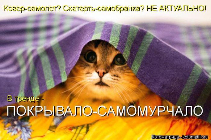 Прикольные и веселые котоматрицы.