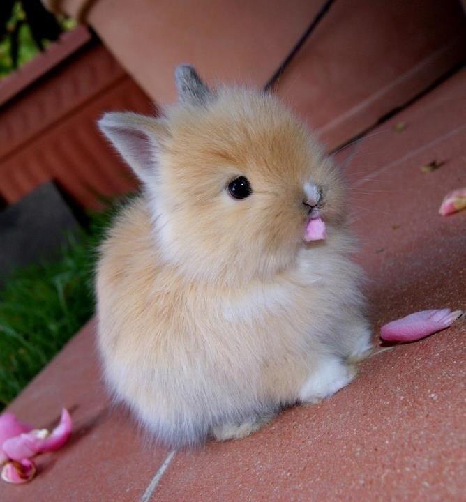 Прикольные и и милые фотографии животных.