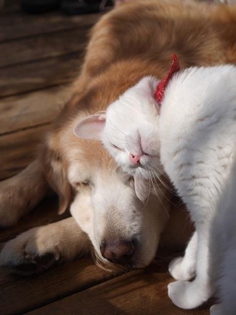 Прикольные и милые наши животные.
