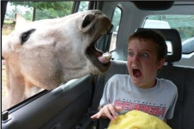 Странные люди и смешные животные