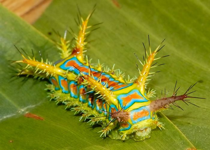 Эволюция самых странных существ нашей планеты (23 фото)