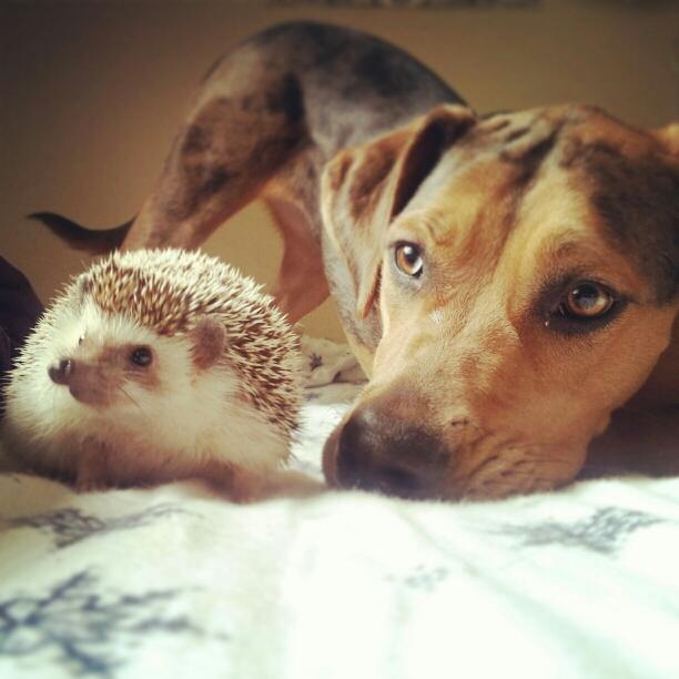 Прикольные и смешные милые животные.