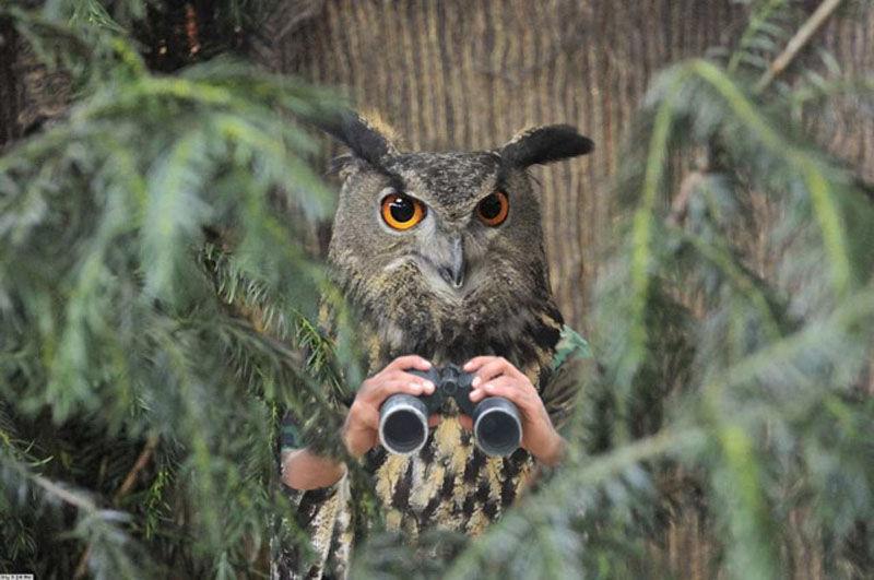 Странные рукастые птицы