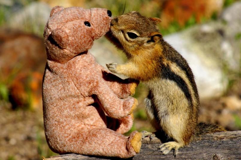 Милые и забавные животные.