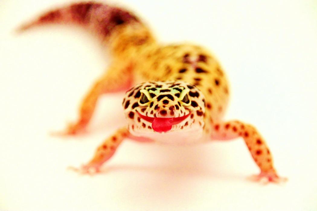 Прикольные и милые фотографии животных.