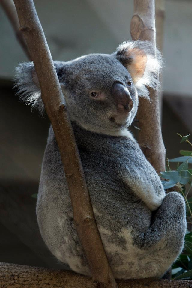 Прикольные и милые фотографии животных
