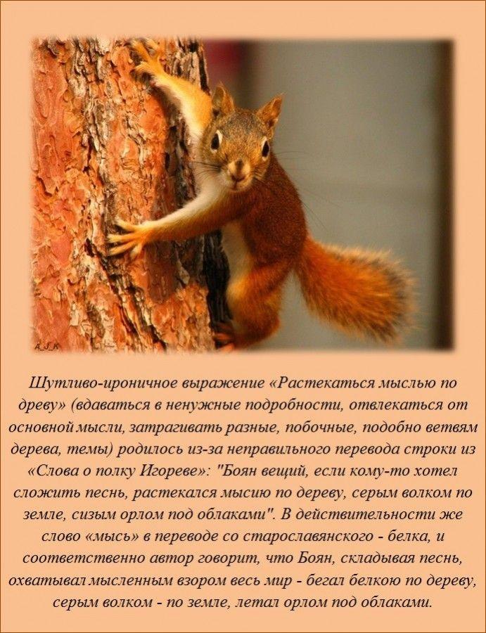 Интересные факты (20 фото)
