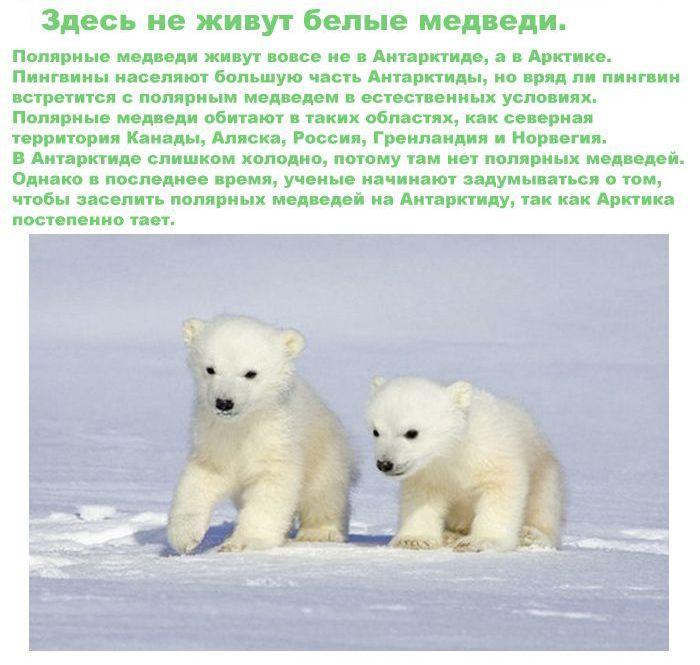 Интересные факты об Антарктиде (11 картинок)