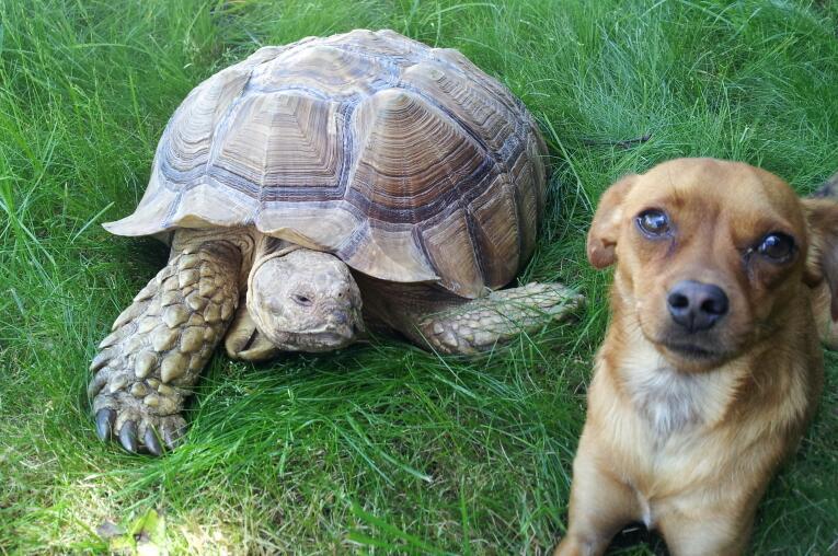 Прикольные, забавные, милые и позитивные животные.