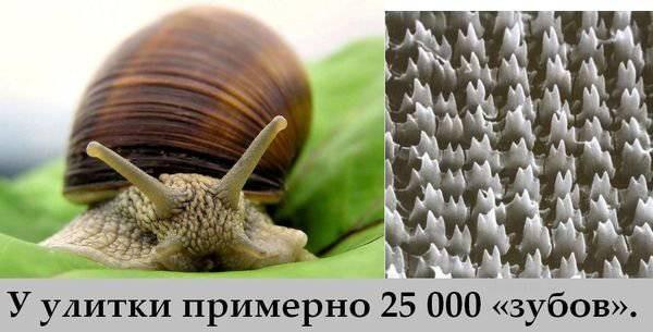 Прикольные картинки (110 фото)