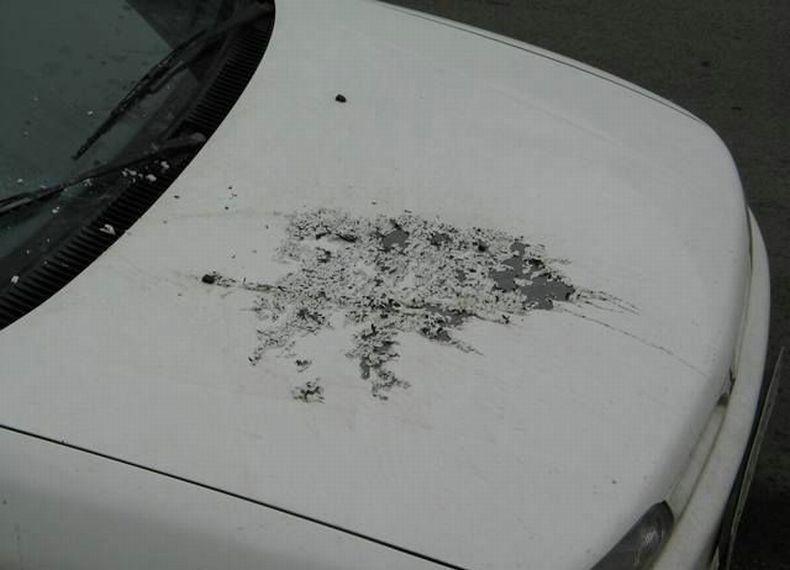 Страшная автомобильная месть