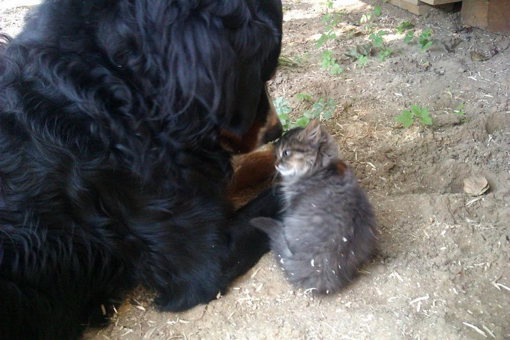 Подборка милых и позитивных животных.