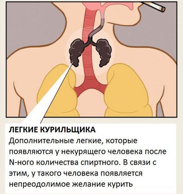 Органы человеческого тела, о которых мы не знали (10 картинок)