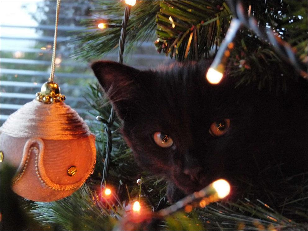 http://www.zapilili.ru/pics/2/10/cats_02169_014.jpg