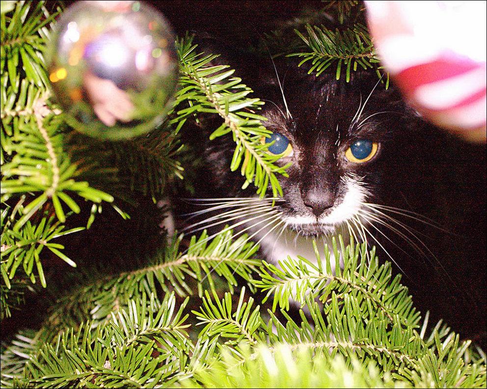 http://www.zapilili.ru/pics/2/10/cats_02169_018.jpg