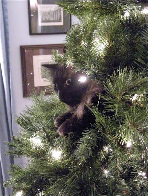http://www.zapilili.ru/pics/2/10/cats_02169_030.jpg