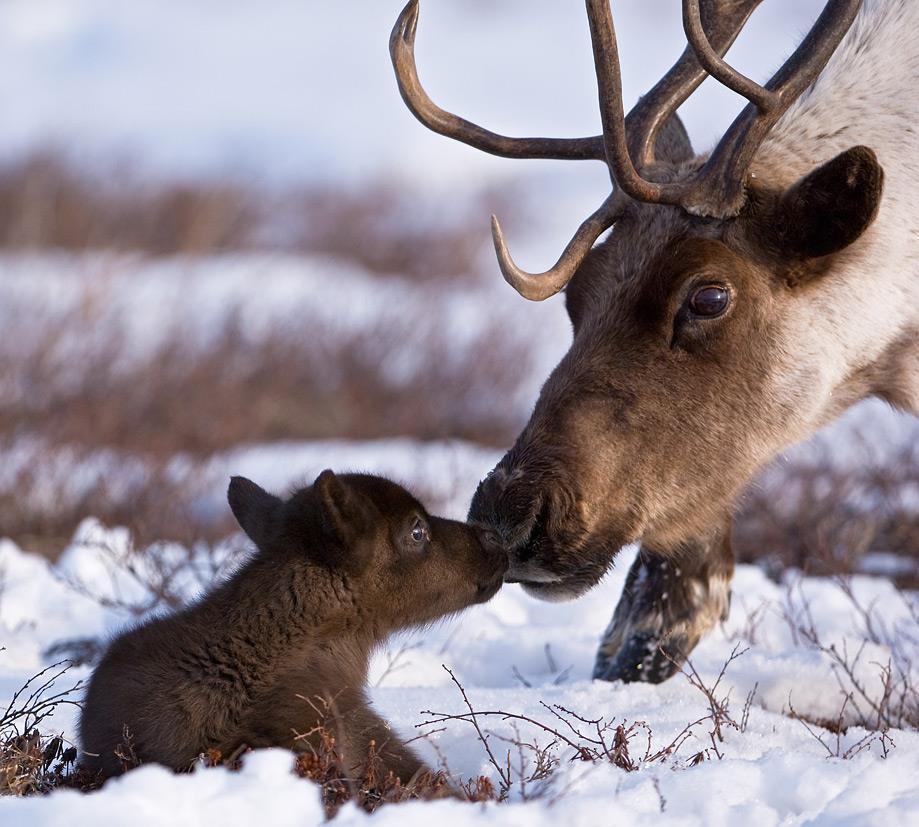 Прикольные и милые животные .