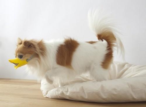 Прикольные намордники для собак - Quack