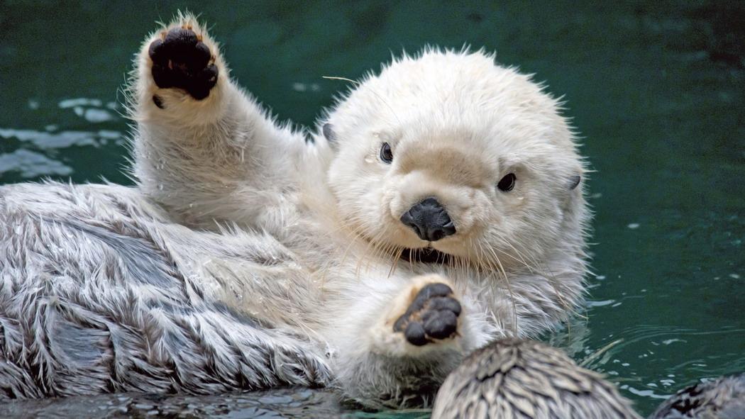 Лучшие фотографии милых животных  за неделю.