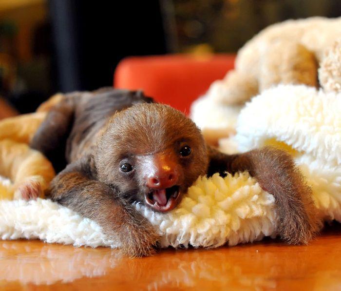 Самые позитивные снимки животных за 2012 год (45 фото)