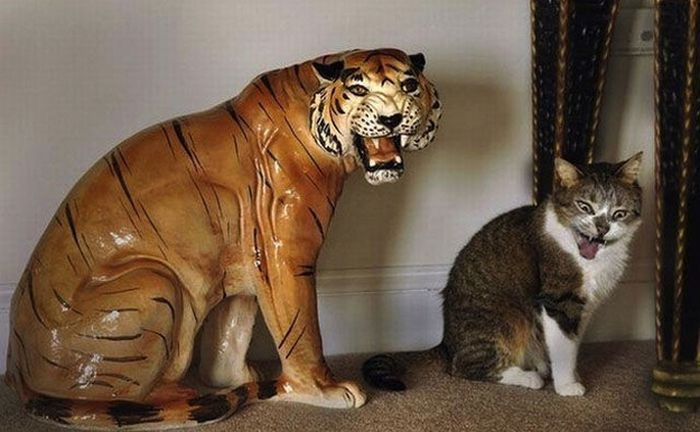 Снимки домашних котов, сделанные в нужный момент (25 фото)