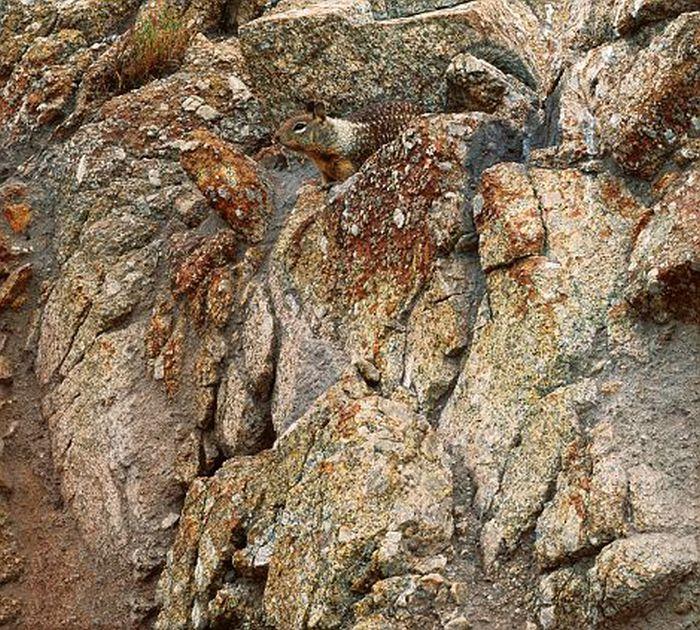 Камуфляж, продуманный природой (23 фото)