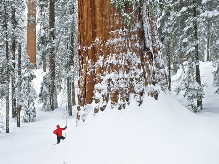 Лучшие снимки от National Geographic за 2012 год (45 фото)