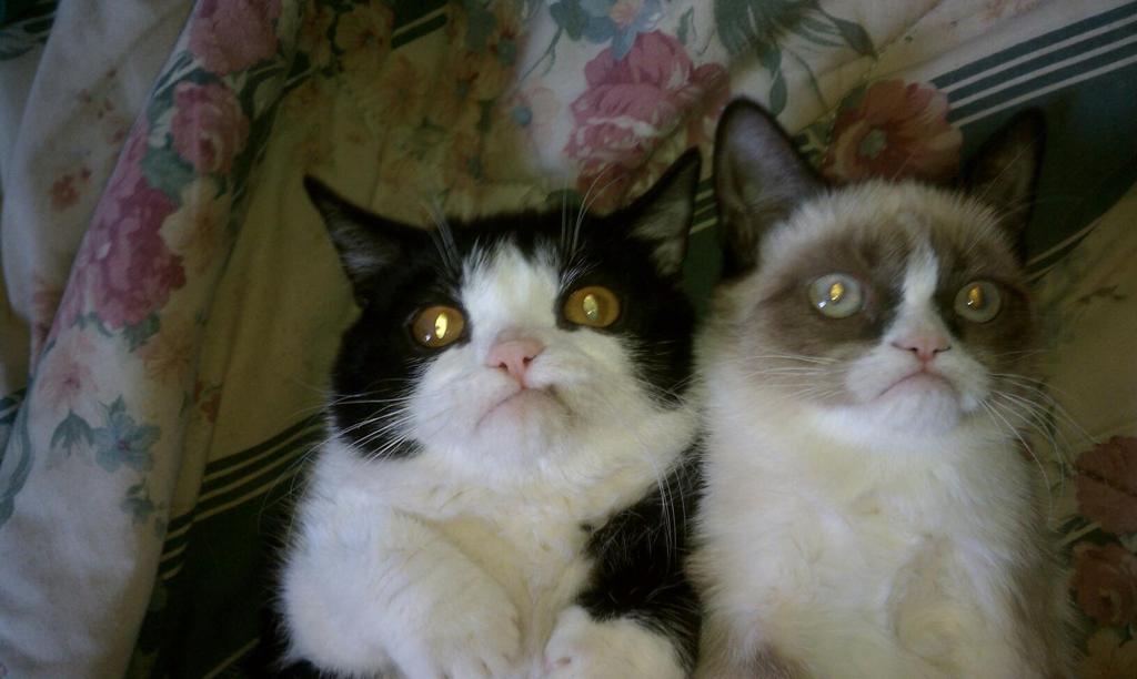 Смешные и мылые животные.
