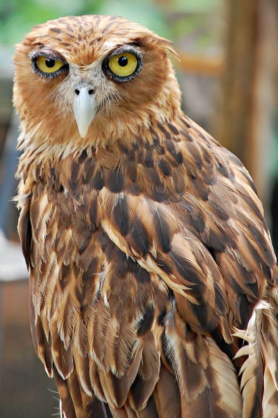 Похмельные совы
