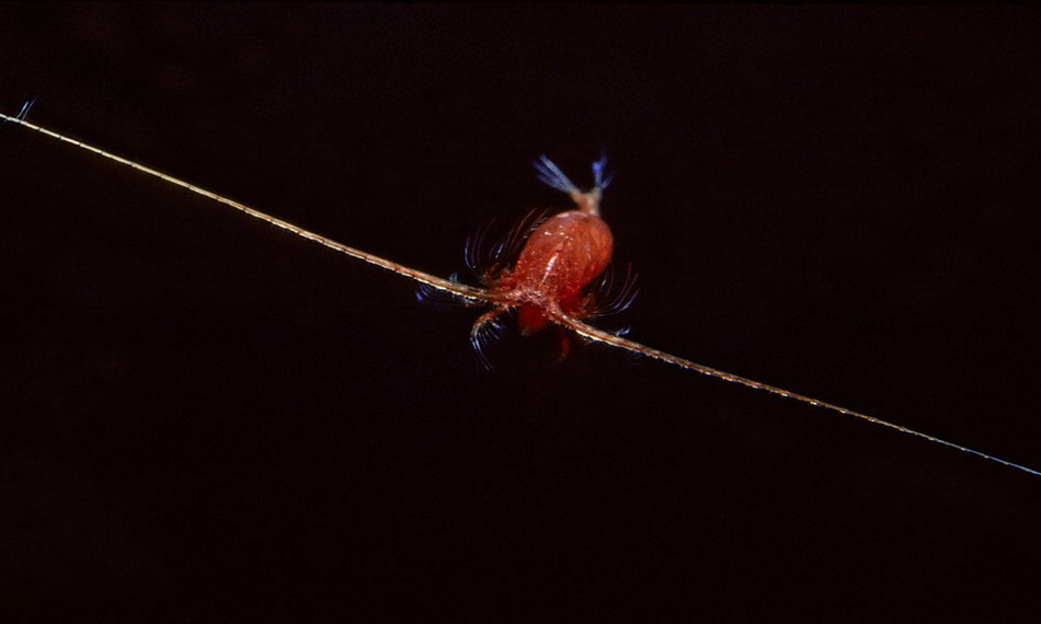 Жуткие Обитатели океанских глубин
